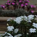 花_植物園 D5319