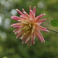 花?_植物園 D5323