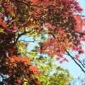 紅葉_天神山 F0799