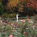 神代植物公園 D5976