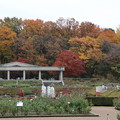 神代植物公園 D5984