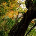 Photos: 林の樹