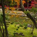 Photos: 書院の庭