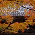 Photos: 山門の秋