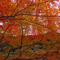Photos: 秋の石垣