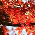 紅葉天空彩河