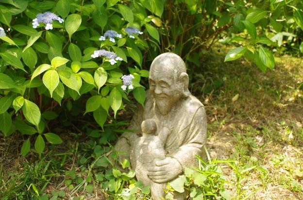 写真: 浄慶寺のあじさい