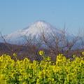 写真: 吾妻山公園