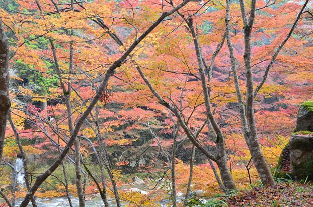写真: 色づく渓谷