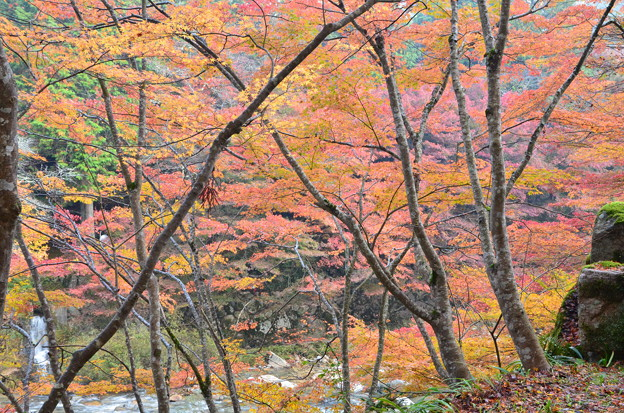 色づく渓谷