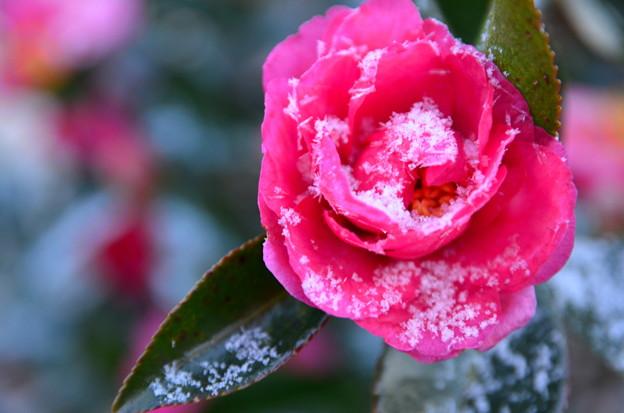 小雪と迎えた朝
