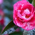 写真: 小雪と迎えた朝