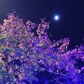 Photos: 月と紅葉