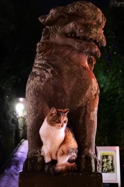 写真: 狛犬にゃんこ