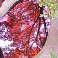 写真: 水面の紅