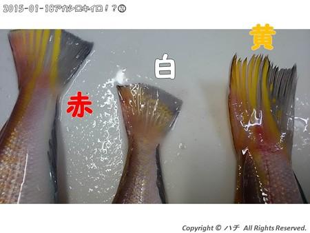 2015-01-18アカシロキイロ!?(2) (7)
