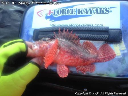 2015-01-24平たいヤツ食べたい釣りたい (11)