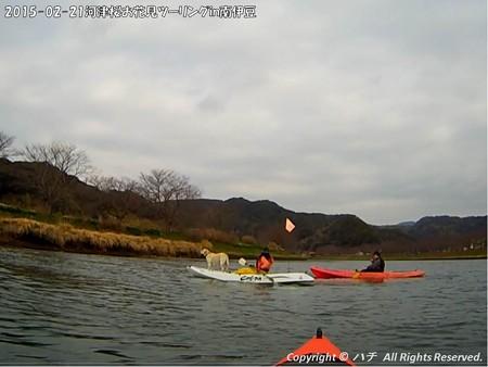 2015-02-21河津桜お花見ツーリングin南伊豆 (2)