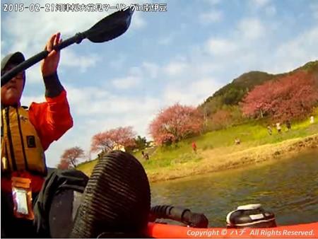 2015-02-21河津桜お花見ツーリングin南伊豆 (21)