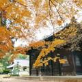 曹源寺の紅葉