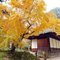 岡山後楽園の紅葉 NO.1