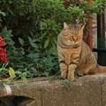 写真: 南天と猫