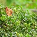 写真: 落ち葉の季節が