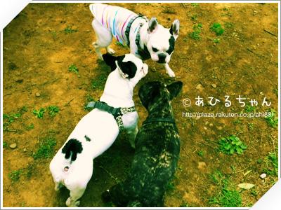 写真: 20110523_02