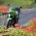 写真: 彼岸花を見に行こう!