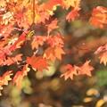 写真: 秋の陽を浴びて