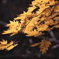 写真: 秋の日差し