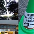 20171217_ちんじゅ