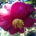 Photos: 神社の花