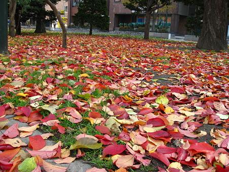 落ち葉のじゅうたん1