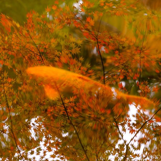 成田山公園-7583
