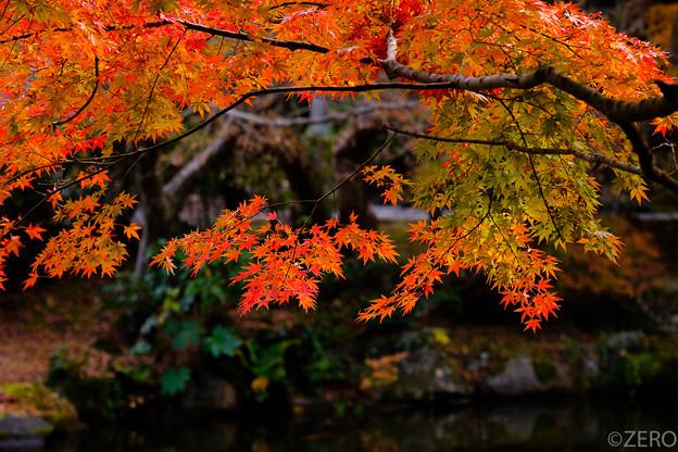 成田山公園-7617