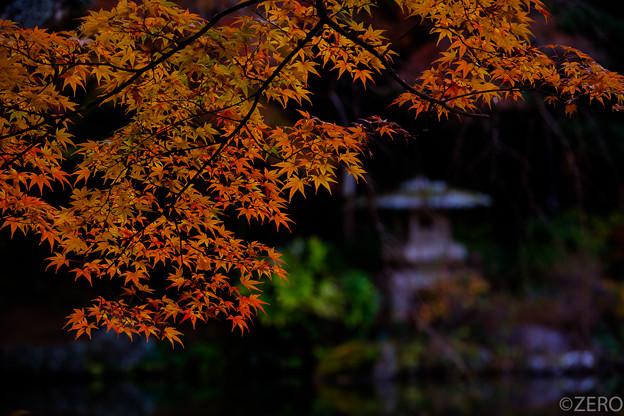 成田山公園-7655