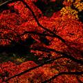 成田山公園-7679