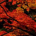成田山公園-7680