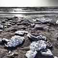 Photos: 氷