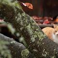 写真: 猫の細道にて