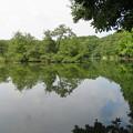 石神井城(練馬区。都立石神井公園)三宝寺池