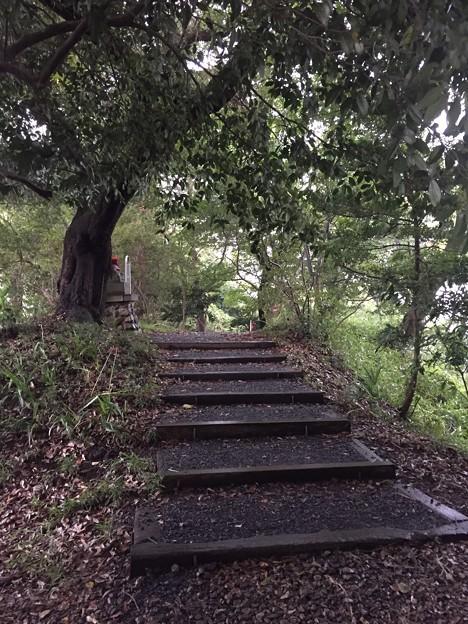 Photos: 高幡城/高幡不動尊(日野市)三郭
