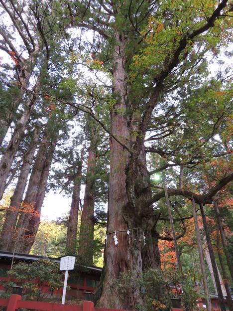 日光二荒山神社(栃木県)縁結びの御神木