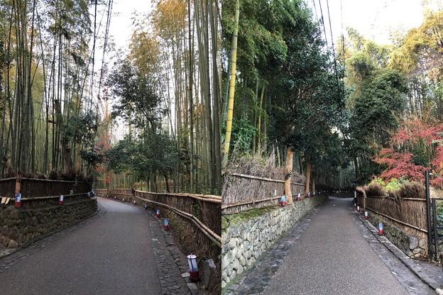 嵯峨野 竹林の道(右京区)手前