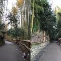 写真: 嵯峨野 竹林の道(右京区)手前