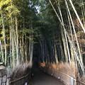 写真: 嵯峨野 竹林の道(右京区)ここから(°ω°)