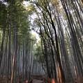 写真: 嵯峨野 竹林の道(右京区)