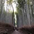 嵯峨野 竹林の道(右京区)