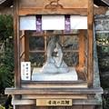 松尾大社(西京区)幸運の双鯉